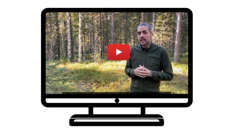 Arboreal Skog känner nu igen trädslag